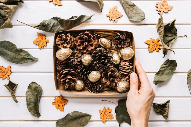 Pine cones and nuts in box, dried leaves on white background