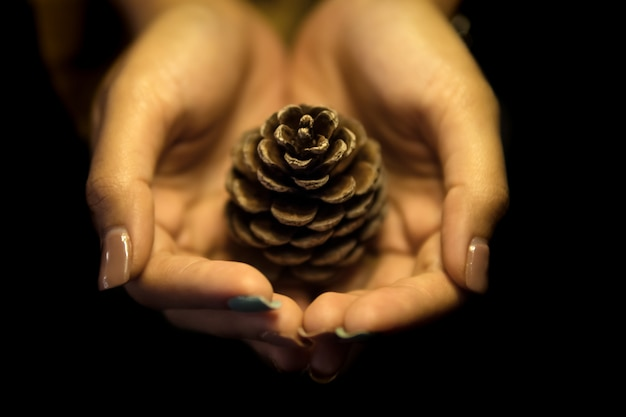 Pine cones placed in the hands of women.