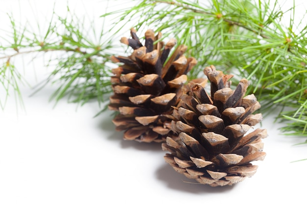 Pine cones on a white
