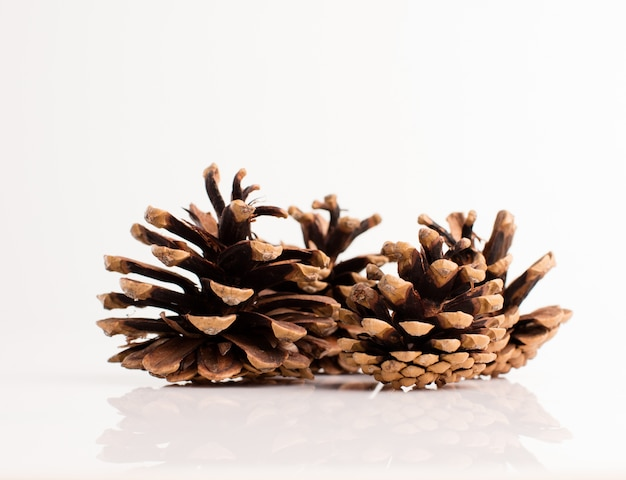 Pine cones with white background