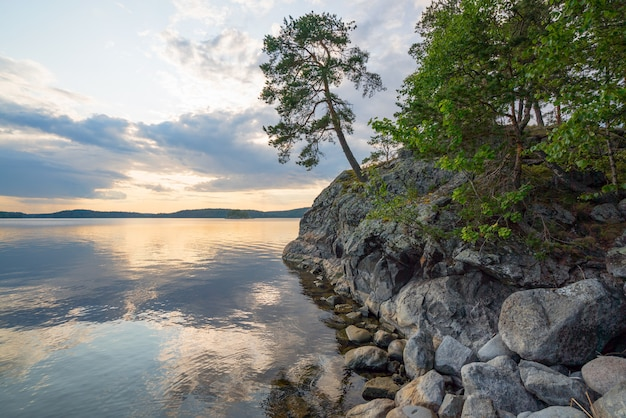 Pine on the edge of the picturesque shore of the island on lake