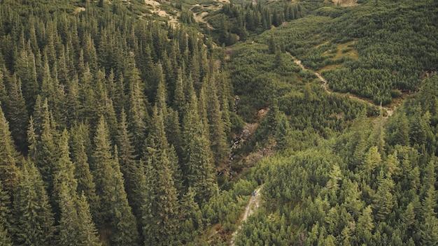 山の尾根の松林空中誰も自然景観ハイキングパス道緑の丘の観光客