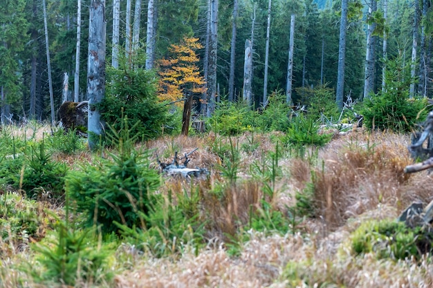 Сосновый лес осенью с сухой травой на склоне горы в заповеднике
