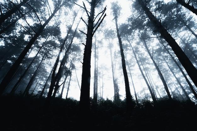 朝、南アジアの冬の山の松林