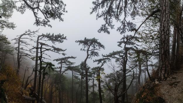 안개 낀 날씨의 산비탈에 있는 소나무 숲, 탁 트인 전망