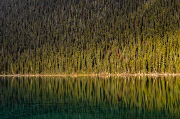 Pine forest reflecion on calm lake louise  in the banff national park, alberta, canada