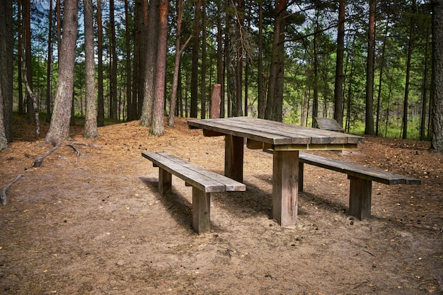 Pine forest scene with picnic zone.