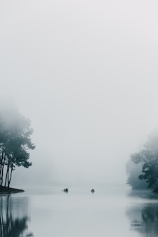 Pine forest with foggy at pang oung, mae hong son, thailand