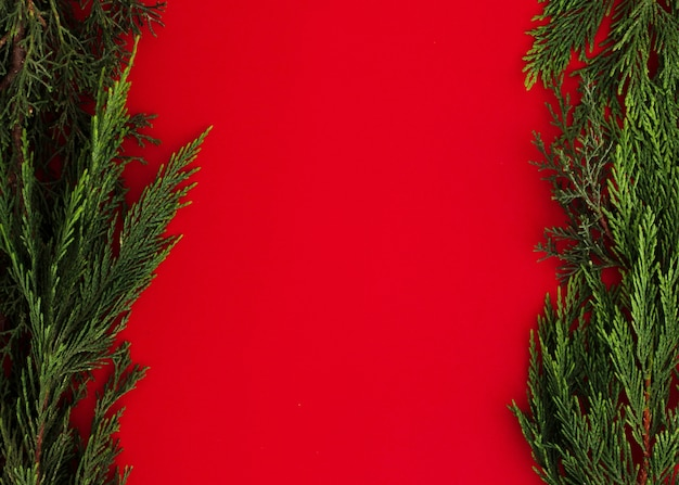 Pine leaves on a red background with copy space