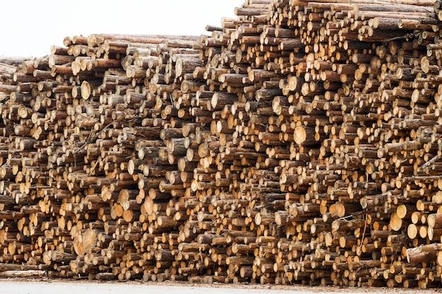 Бревна сосны сложены в стопку. заготовленные бревна, вид спереди
