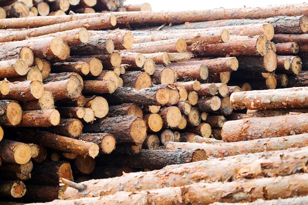 Pine logs stacked in piles. wood harvesting for industry