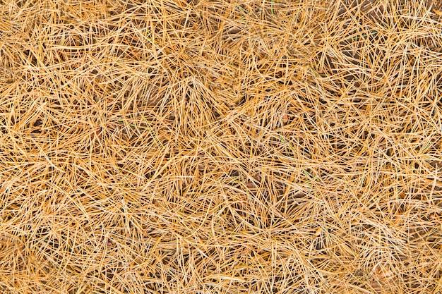 Сосновые иглы текстуры. фон из желтых сосновых иголок в лесу