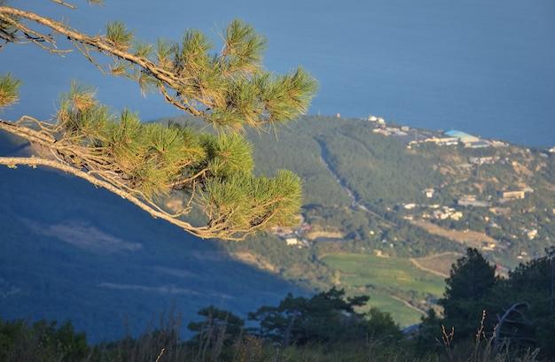 街のパノラマを見下ろす崖の上の松、