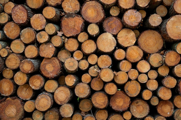 Pine timber, ready for transport from forest