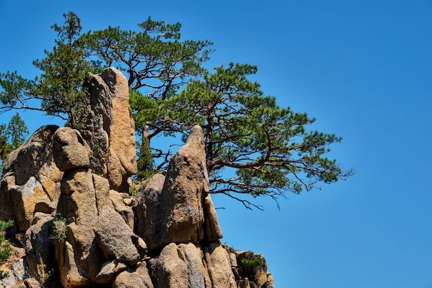 소나무와 바위 절벽, 설악산 국립 공원, 한국