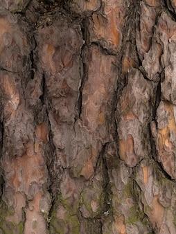 松の木の樹皮、茶色の抽象的なテクスチャ、暗い天然木の背景