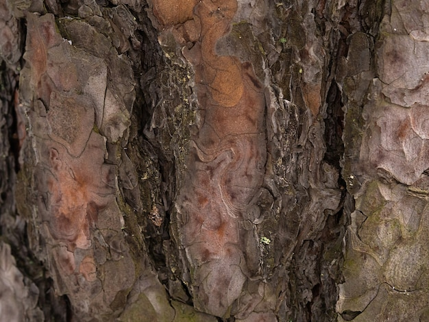 Pine tree bark, brown abstract texture, dark natural wood background