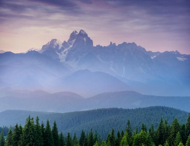 松の木の森。美の世界。カルパティア山脈ウクライナヨーロッパ