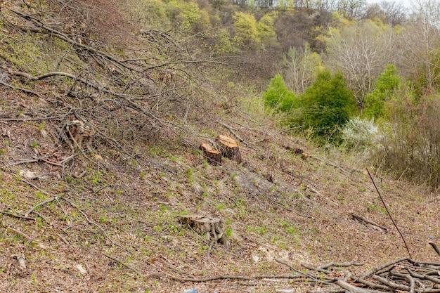 晴れた日の松林業の搾取。切り株と丸太は、乱獲が森林破壊を危険にさらす環境と持続可能性につながることを示しています。