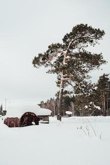村の近くの松林の隣に生えている松の木
