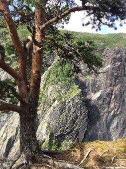 松の木が崖の端にある山に生える
