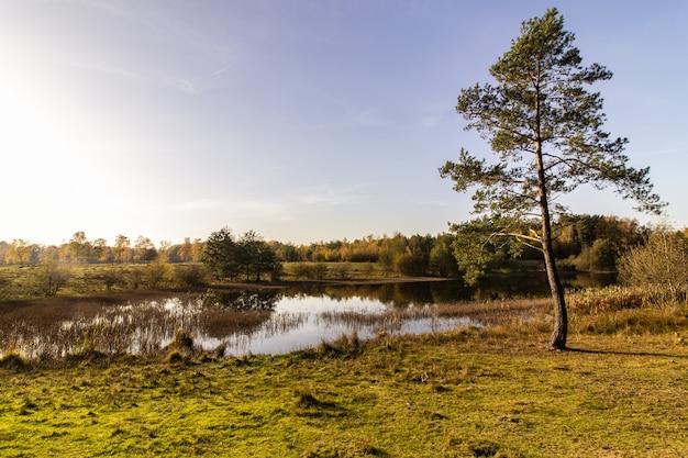 澄んだ青い空の下で晴れた秋の日に湖の近くの松の木