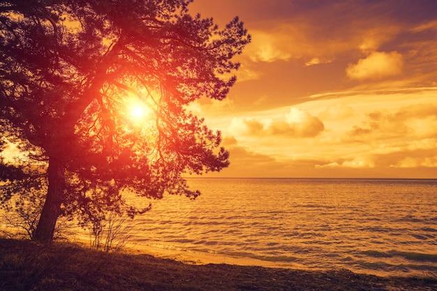 紫の夕日の海の近くの松の木