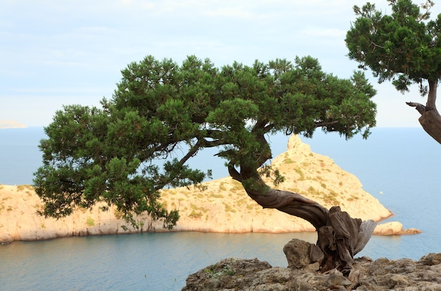 「capchik」岬が後ろにある岩と海の松の木(「novyjsvit」保護区、クリミア、ウクライナ)。