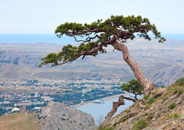 여름 산 언덕 (크림, 우크라이나, sudack 타운)에 소나무.