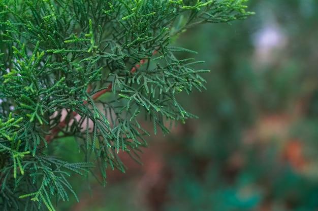 毛深い葉と松の木