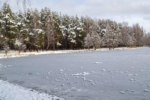 나뭇 가지가있는 은행을 따라 소나무는 눈과 얼어 붙은 숲 호수로 덮여 있습니다. 겨울 분위기, 라트비아의 자연. 맑은 날씨, 맑은 날.