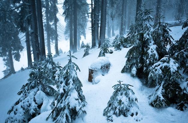 地面のある冬の森で雪に覆われた松やモミの木