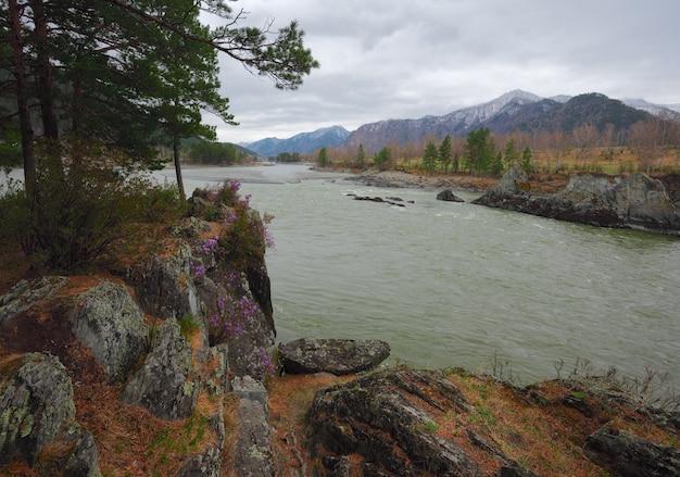 緑の水とアルタイ川の急な土手にある松の木と大きな石