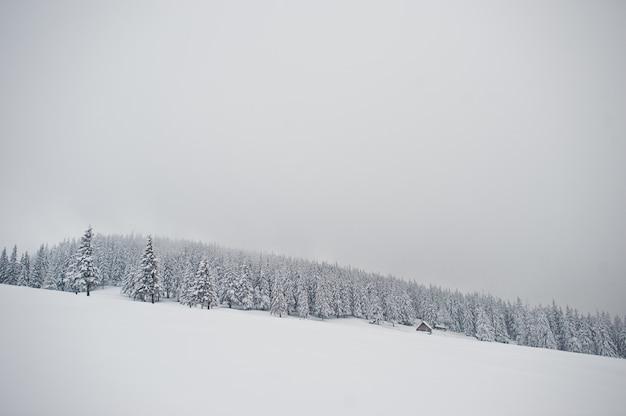 Сосны, покрытые снегом на горе хомяк, красивые зимние пейзажи карпатских гор, украина, морозная природа,