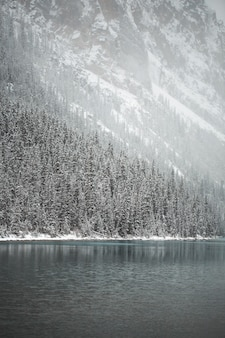 Alberi di pino coperti di neve