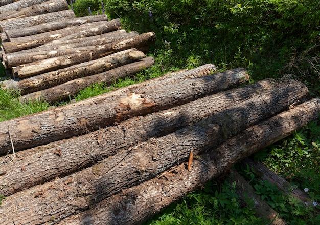 木工用の木材の準備中の松の木、森の松の木の幹の収穫