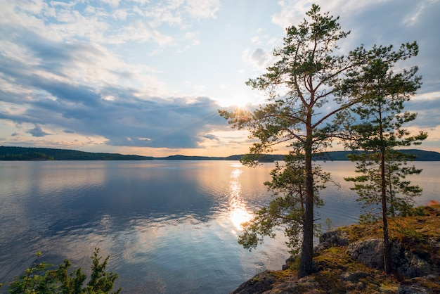 Pine trees on the edge of the shore of the island on