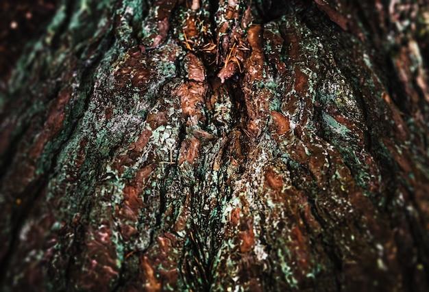 森の中の松の木。松の樹皮。自然の背景