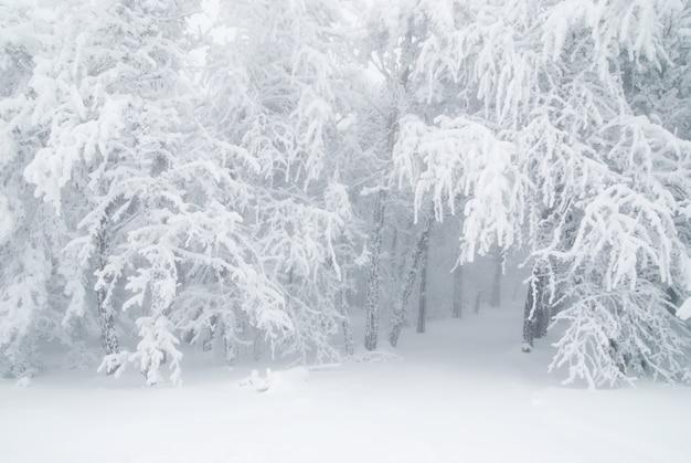 霧の中で冬の雪の松の木