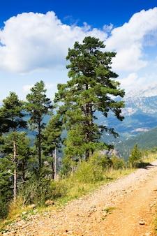Alberi di pino alle montagne
