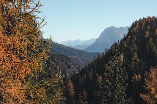 昼間の青い空の下の山の松の木