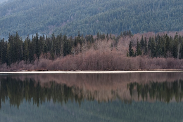 Pine trees reflecting on lake in a forest, whistler, british columbia, canada