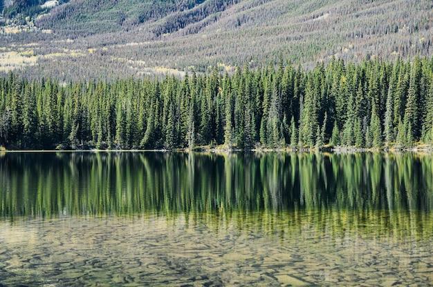 Отражение сосен на пруду в солнечный день