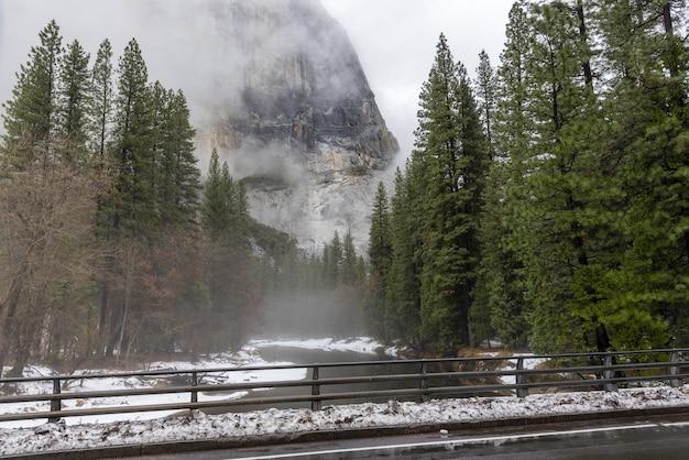 Alberi di pino e fiume in una giornata di nebbia nel parco nazionale di yosemite