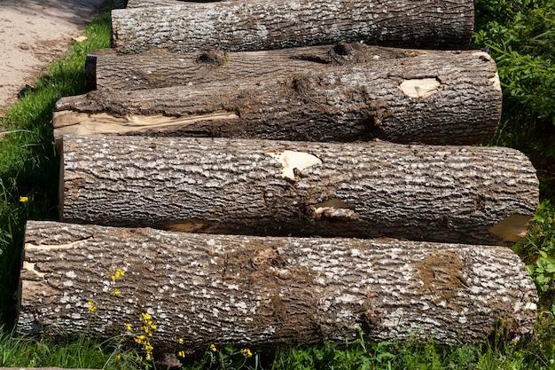木工用の木材の準備中の松の幹、森の松の木の幹の収穫