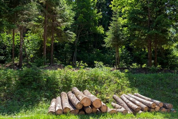 Стволы сосны при подготовке древесины к обработке древесины, заготовке стволов сосны в лесу.
