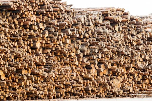 Спилы древесины сосны в куче бревен, общий вид заготовленного бревна