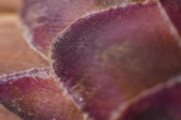 파인애플 야자수 꽃잎 클로즈업 매크로 배경
