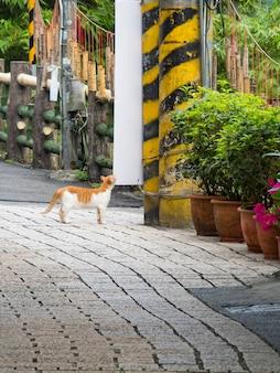 핑시, 대만 - 2021년 9월 20일: 2021년 9월 20일 대만 신베이시 핑시에 있는 핑시 옛 거리 외관.
