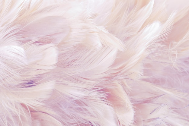 ピンクの抽象的な背景鳥と鶏の羽の質感